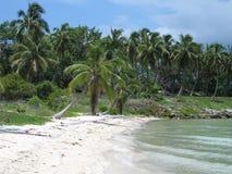 Praia com palmas Imagens de Stock Royalty Free
