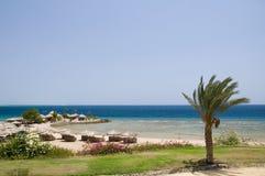 Praia com palmeira imagens de stock