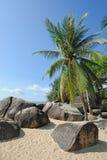 Praia com palmeiras Fotos de Stock Royalty Free