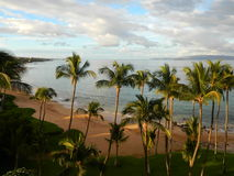 Praia com palmeiras Imagem de Stock Royalty Free