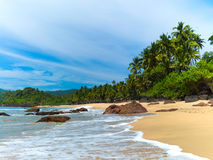 Praia com palmeiras Fotografia de Stock