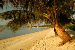 Praia com palmeiras Foto de Stock Royalty Free
