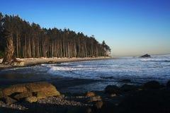 Praia com treeline Fotografia de Stock Royalty Free