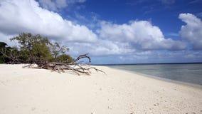 Praia coral tropical Imagens de Stock