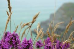 Praia Cornish Imagens de Stock Royalty Free