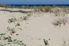 Praia da areia Imagem de Stock
