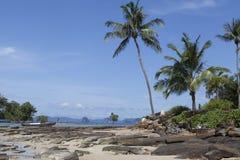 Praia da areia com árvores de coco Tailândia Phuket Imagem de Stock