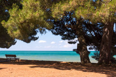 Praia da areia com pinheiros Fotografia de Stock