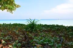 Praia da areia do mar Imagens de Stock
