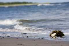 Praia da areia e ocean.GN fotografia de stock royalty free