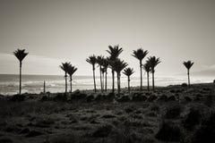 Praia da costa oeste, Nova Zelândia imagem de stock royalty free