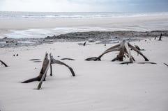 Praia da ilha do mar Imagens de Stock