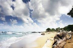 Praia da ilha do Pacífico Imagens de Stock