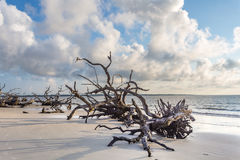 Praia da madeira lançada à costa, ilha Geórgia de Jekyll imagem de stock