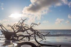 Praia da madeira lançada à costa, ilha Geórgia de Jekyll imagens de stock royalty free
