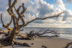 Praia da madeira lançada à costa, ilha Geórgia de Jekyll foto de stock