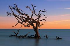 Praia da madeira lançada à costa na ilha de Jekyll foto de stock royalty free