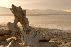 Praia da região selvagem Foto de Stock