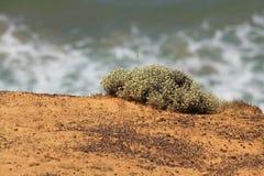 Praia da ressaca em Austrália Foto de Stock Royalty Free