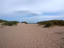 Praia das areias, floresta de Tentsmuir, Tayport Fotografia de Stock Royalty Free