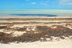 Praia das Caraíbas da ilha de Holbox fotografia de stock
