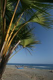 PRAIA DE ÁSIA TIMOR-LESTE TIMOR-LESTE BETANO Imagens de Stock Royalty Free