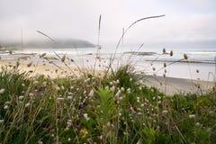 Praia de Ahipara Fotos de Stock Royalty Free
