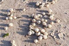 Praia de Amrum Imagem de Stock