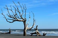 Praia de Boneyard foto de stock