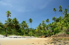 Praia de Brasil Imagens de Stock