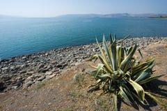 Praia de Capernaum Foto de Stock