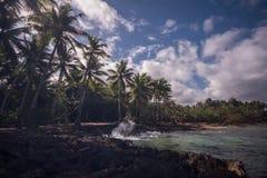 Praia de Caribe com lapso de tempo das palmeiras video estoque