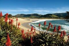 Praia de Carmel fotografia de stock royalty free