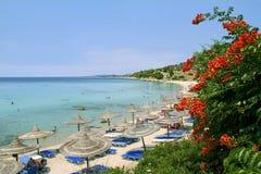 Praia de Chalkidiki com planta do bughenvilla fotos de stock royalty free