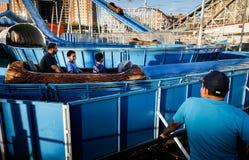 Praia de Coney Island em NYC Fotografia de Stock