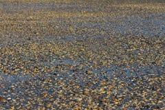 Praia de escudos e de areia misturados foto de stock