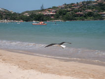 Praia de Ferradura em Buzios, Brasil foto de stock royalty free