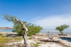 Praia de Florida Imagens de Stock Royalty Free