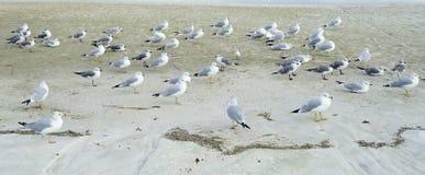 Praia de Florida St Petersburg: descanso do pássaro imagens de stock