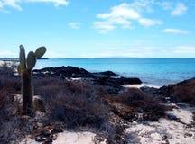 Praia de Galápagos imagens de stock royalty free