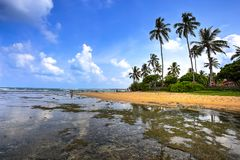 Praia de Hikkaduwa, Sri Lanka Fotografia de Stock