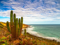 Praia de Jericoacoara Fotografia de Stock
