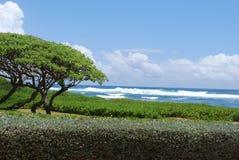 Praia de Kauai Imagem de Stock