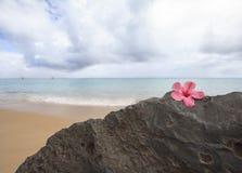 Praia de Kauai Anini fotografia de stock royalty free