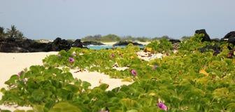 Praia de Makalawena Imagem de Stock