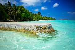 Praia de Maldivas com palmas Fotografia de Stock