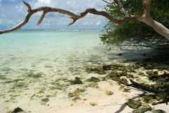 Praia de Maldives Fotografia de Stock Royalty Free