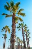Praia de Malvarrosa, Valência, Espanha Imagens de Stock Royalty Free
