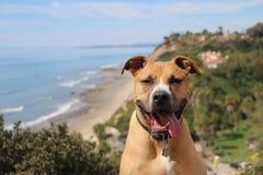 Praia de negligência do cão Fotos de Stock