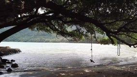 Praia de Northshore na ilha de Oahu em Havaí vídeos de arquivo